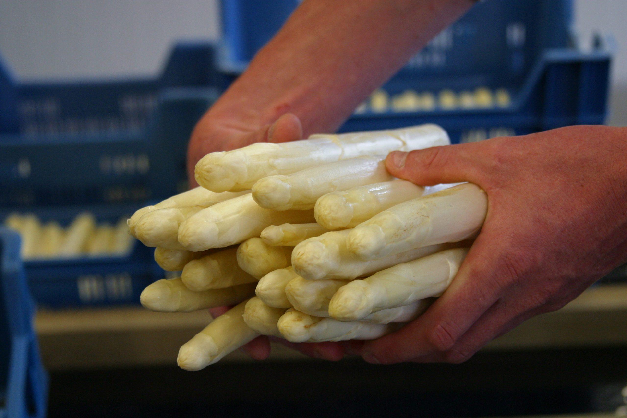 Hoeveel asperges heb je nodig?